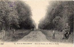 - Forêt De PHALEMPIN -1910- Drève De Drumez, Vers Mons En Pevèle - France