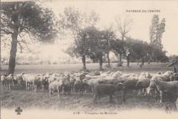 PAYSAGES   DU CENTRE      TROUPEAU DE MOUTONS       PIONNIERE - France