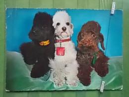 KOV 856 - DOG, HUND - Dogs