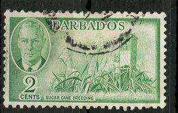Barbados 1950 2p Sugar Cane Issue  #217 - Barbados (1966-...)