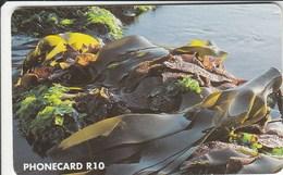 South Africa - Intertidal Wealth - Marine Flora - Zuid-Afrika