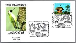 PITO REAL - European Green Woodpecker - Grünspecht - Picus Viridis. Gaildorf 2014 - Climbing Birds
