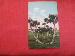 > Bermuda Palmetto Grove  Ref 2861 - Bermuda
