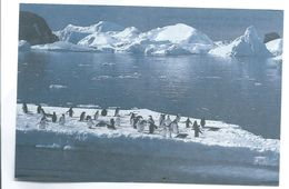 C PM Territoire Des Terres Australes Et Antarctique Française - Terre D' Adelie  Timbre Imprimé Recto Amiral Max Douguet - Postcards
