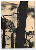 Photographe  Albert MONIER-- Piège De Soie   ( Toile D'araignée Sur Fond De Barbelés  ) - Monier