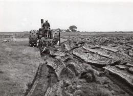 Belgique Zandvliet Alluvions Culture Du Colza Agriculture Ancienne Photo De Presse 1942 - Professions