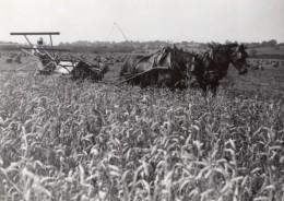 France Moisson Recolte De Ble Agriculture Ancienne Photo De Presse Trampus 1940 - Professions