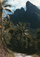 712Ma  Tahiti Grande Photo Originale (29cm X 21cm) Un Chemin Et La Montagne à Situer - Tahiti