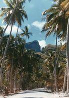 712Ma  Tahiti Grande Photo Originale (29cm X 21cm) Route Entre Palmiers Et La Montagne à Situer - Tahiti