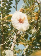 712Ma  Tahiti Grande Photo Originale (24cm X 17.5cm) Une Belle Fleur à Identifier - Tahiti