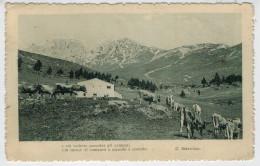 C.P.  PICCOLA     PASCOLO  DI  MONTAGNA  CON  POESIA  DI G, BERTACCHI  1915    2 SCAN  (VIAGGIATA) - Italy