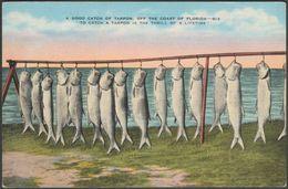 A Good Catch Of Tarpon, Florida, C.1930 - Kropp Postcard - United States
