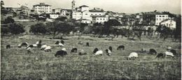 CORSE CPA ILE ROUSSE - Autres Communes