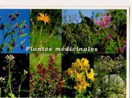 Plantes Medicinales Consoude ,Arnica,Ortie,Mauve,Bourse A Pasteur,Fumeterre,Millepertuis,Valeriane - Plantes Médicinales
