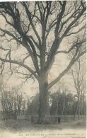 Bonsecours - 52 - Chêne De La Duchesse - Péruwelz