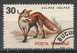 Romania 1993. Scott #3839 (U) Animal, Vulpes Vulpes, Red Fox * - 1948-.... Républiques