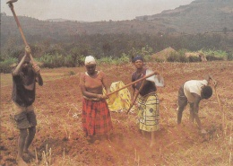 Agriculteurs Labourant à La Houe (Rwanda) - Rwanda