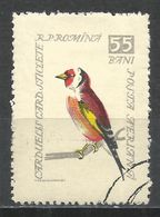 Romania 1959. Scott #C65 (U) Bird, Great Spotted Woodpecker - Poste Aérienne
