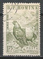 Romania 1960. Scott #C77 (U) Animal, Black Grouse * - Poste Aérienne