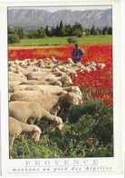 Moutons Au Pied Des Alpilles - Animaux & Faune