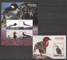 O1365 2015 ST.VINCENT FAUNA BIRDS DUCKS OF THE CARIBBEAN 1KB+1BL MNH - Ducks