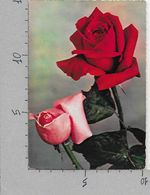 CARTOLINA VG ITALIA - BUON ONOMASTICO - Rose Rosse - CECAMI 268 - 10 X 15 - ANN. 1966 - Fleurs