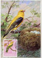 31366 Albania, Maximum  1964  Bird, Oiseau Vogel - Albania