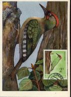 31367 Albania, Maximum  1964  Bird, Oiseau Vogel - Albania