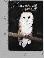 CARTOLINA NV ITALIA - PALIANO (FR) - La Selva - Parco Uccelli - Barbagianni - 10 X 15 - Uccelli