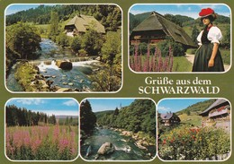 Postcard Grusse Aus Dem Schwarzwald My Ref  B22371 - Greetings From...