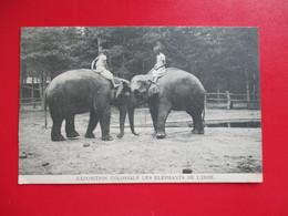 CPA EXPOSITION COLONIALE LES ELEPHANTS DE L'INDE - Elephants