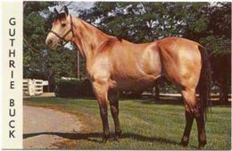Cheval Guthriz Buck Superbe Carte Postale Great Named Horse Postcard - Pferde