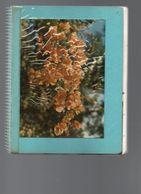 712Ma  Tahiti Cahier Photos Originales Et Annotations Fleurs Faune Plantes - Tahiti