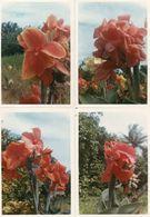 712Ma  Tahiti Lot De 34 Photos Originales Fleurs Plantes Et Autres Années 70 Cestre De Villemomble - Tahiti