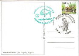 Pologne. Poland. Cachet Tempraire. Grand Duc. Eagle Owl. Uhu - Owls