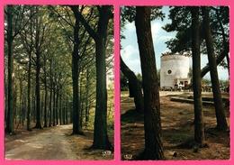 2 Cp - Mont De L'Enclus - Kluisberg - Bosweg Naar De Uitkijktoren - Chemin Forestier Vers Le Belvédère - DAMIENS GOMAR - Mont-de-l'Enclus