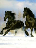 HORSES / PFERDE / CHEVAUX /    POSTCARD XL UNUSED     ( H  5041 ) - Pferde