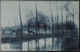 Quiévrain Prairie Le Long De La Grande Honnelle (Carte Bleutée) - Quiévrain