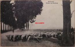 Quiévrain Retour De Moutons - Quiévrain
