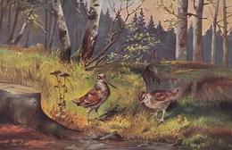 Vogels, Birds, Oiseaux, T.S.N. Serie 1824,  (pk43764) - Vogels