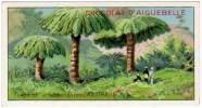 Chromo Chocolat Aiguebelle : Les Arbres Extraordinaires : Fougères Arborescentes, Australie - Aiguebelle