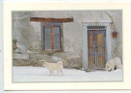 """Chien De Traineau Blanc - Photo Pierre Jacques """"scène Hivernale"""" - Cani"""