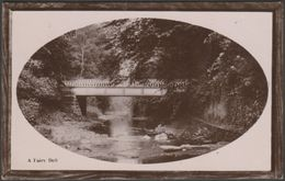 A Fairy Dell, 1910 - Davidson Bros RP Postcard - Postcards