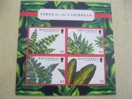 Montserrat Plant Ferns Of The Caribbean - Montserrat