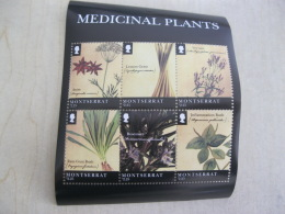 Montserrat Medical Plant Medicine - Montserrat