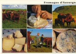 CPM FROMAGES D'AUVERGNE  - DANS LES PRAIRIES D'ALTITUDE LA TRAITE DES VACHES - EDITIONS DEBAISIEUX - Landbouwers