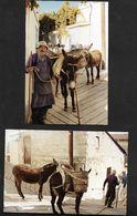 Ane En Promenade ! -  Photo Véritable (non CP ) X 2 - Voyage à Chypre Cyprus Années 90 - Cyprus