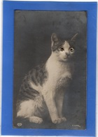 CHATS - Chat Avec Yeux En Bille De Verre - Cats