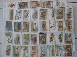Chicorée Williot = 46 Images - Chromos