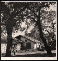 1950  --  LES FERMES LANDAISES A SOORTS   LANDES   3D781 - Non Classés